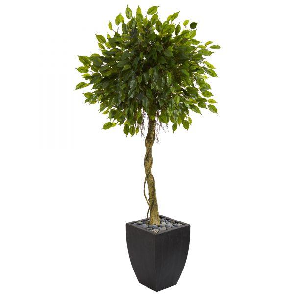 5.5 Feet Ficus Artificial Tree in Black Wash Planter UV Resistant (Indoor/Outdoor) 5780