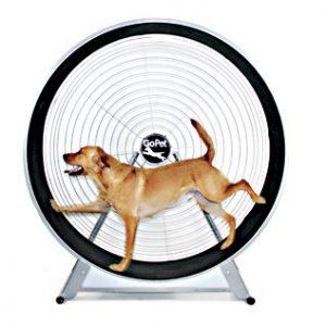 cs6018-dog-treadwheel
