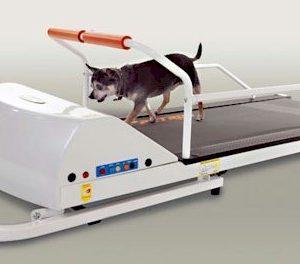 PetRun PR710 Dog Treadmill